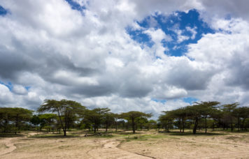 Selous Clouds