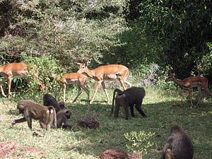Wildlife in Manyara