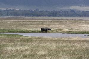 Rhino in Ngorongoro Crater