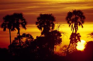 Sun behind trees in Ruaha National Park