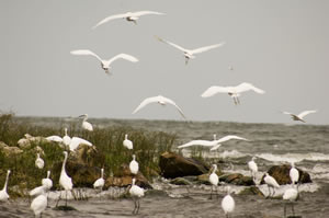 Flock of birds in Sa Nane