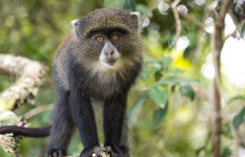 Arusha National Park Wildlife