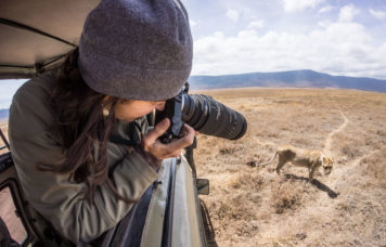 Woman Taking Photo of Lion Ngorongoro