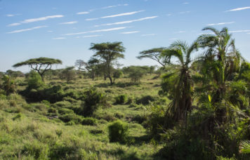Oasis in Serengeti