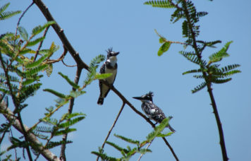 Rubondo Game Reserve