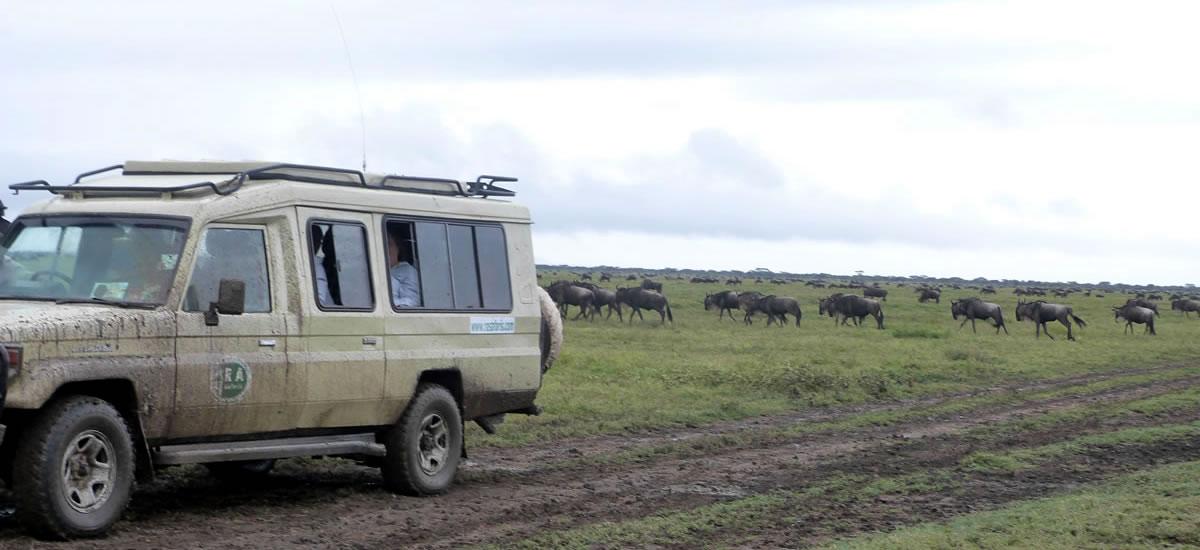 tripslider.safari (11)